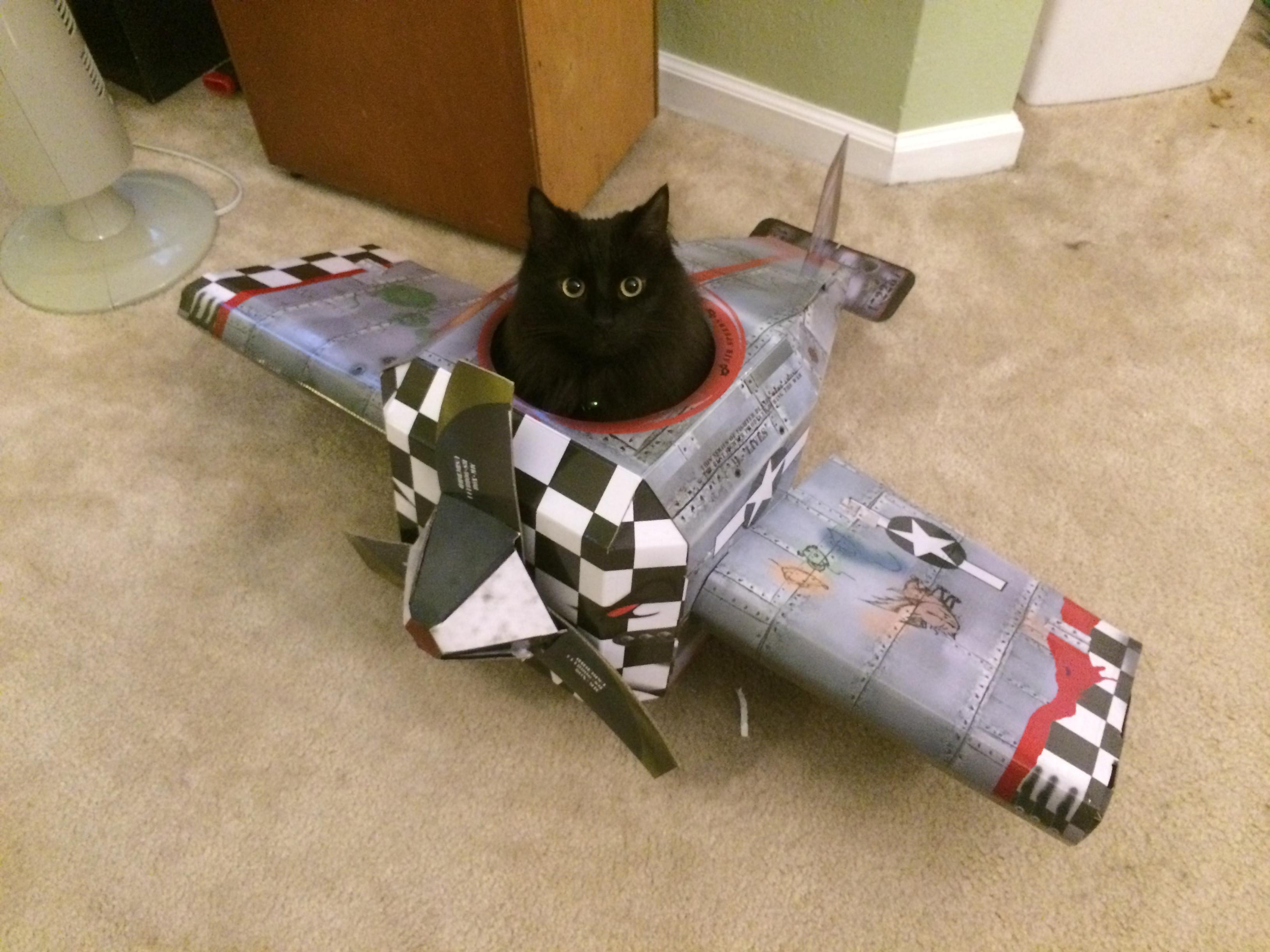 Как перевозить кошку в самолете по России из личного опыта c S7
