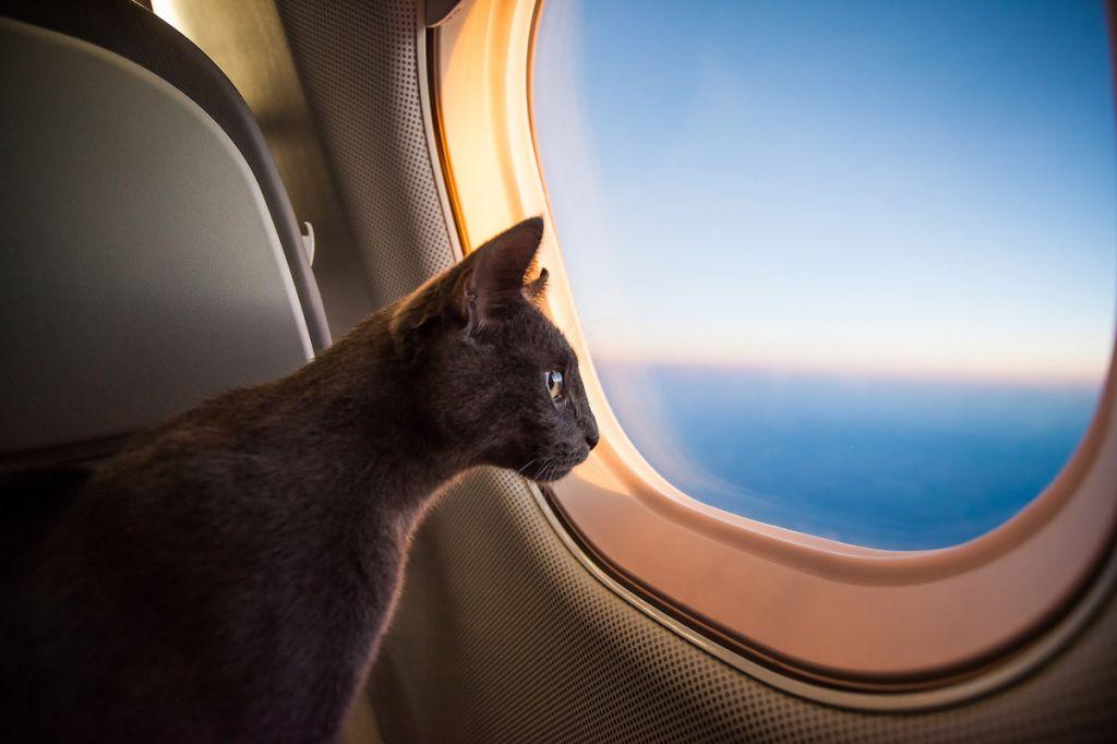 перевозка животных самолетом картинки это чукотская балаклава