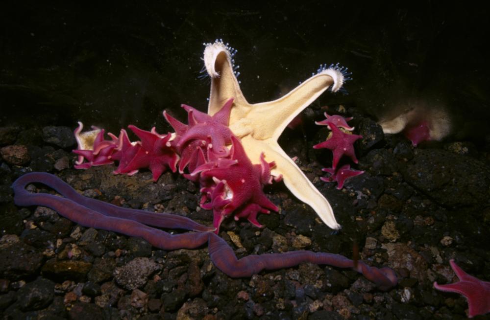 длится курс подводный мир антарктиды фото костер