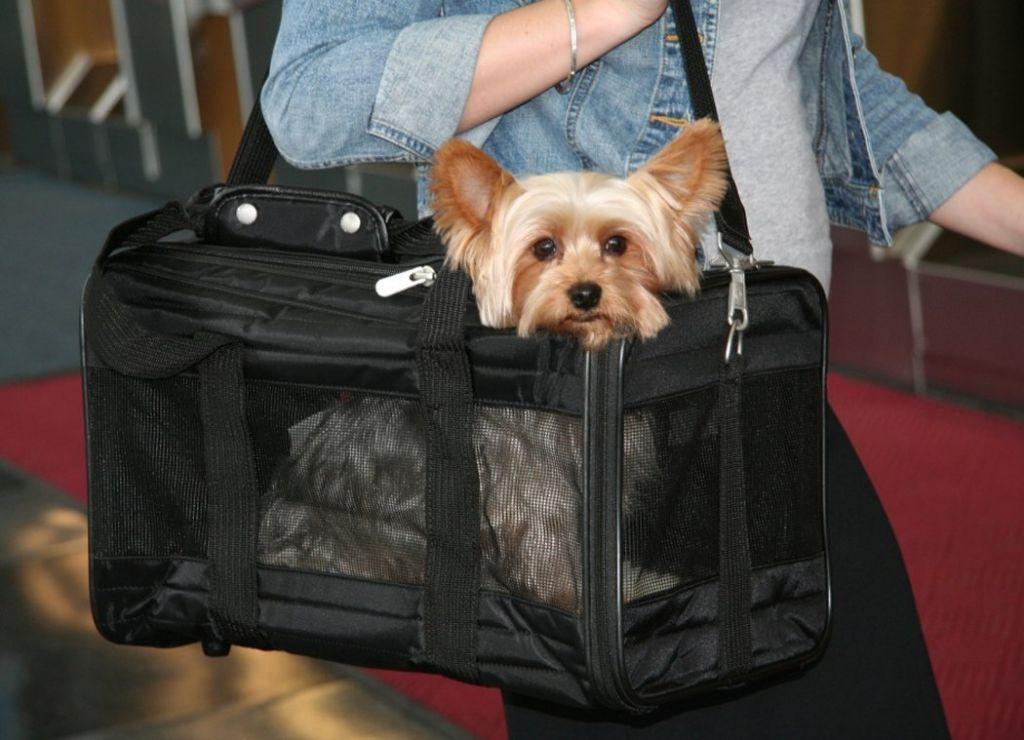Стоимость билета на самолет для собак новосибирск стоимость билетов на самолет